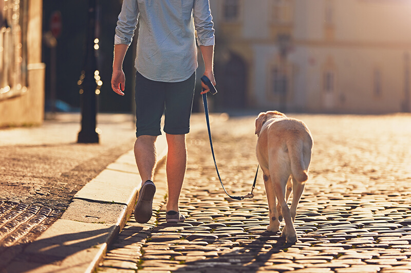 work-from-home-transition--taking-dog-for-a-walk